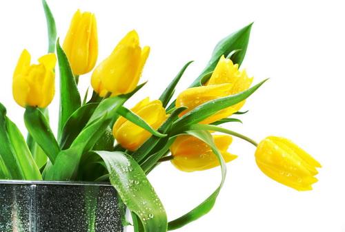 Маска из тюльпанов: увлажнение, особенности применения, рецепты