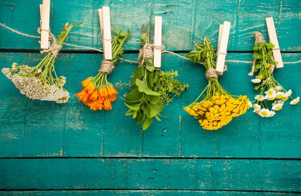 Травы для лица: списки полезных, рейтинг брендов, домашние рецепты